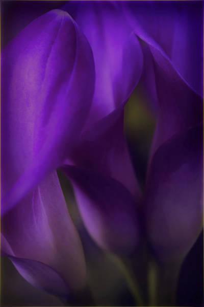 Calla Photograph - Sound Of Silence by Darlene Kwiatkowski