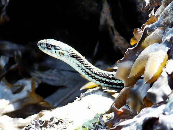 Photograph - Sound Snake by Tarey Potter