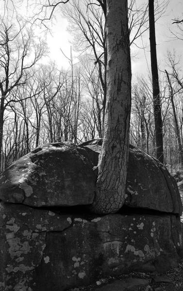 Somerset County Photograph - Sourlands-the Ridge by Steven Richman