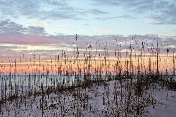 Photograph - South Alabama Dunes by JC Findley