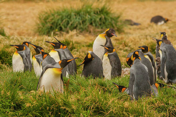 Bahia Photograph - South America, Chile, Patagonia, Tierra by Jaynes Gallery