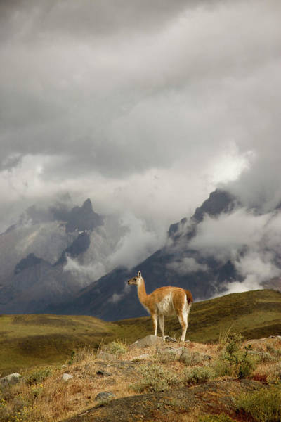 Wall Art - Photograph - South America, Chile, Torres Del Paine by Jaynes Gallery