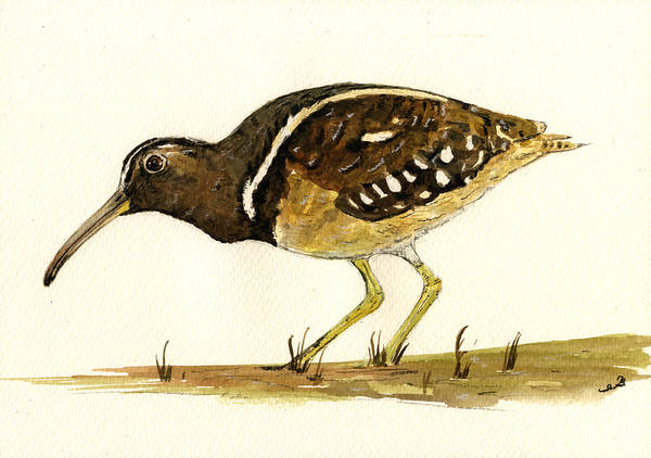 Paint Painting - South American Painted Snipe by Juan  Bosco