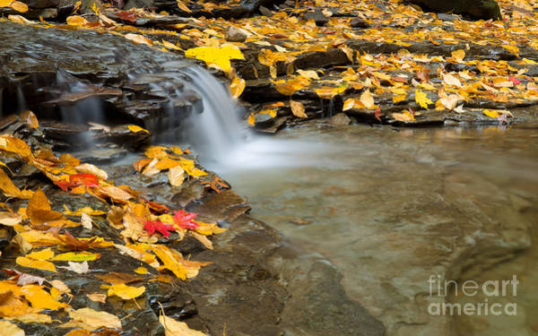 Photograph - South Chagrin Reservation by Joshua Clark
