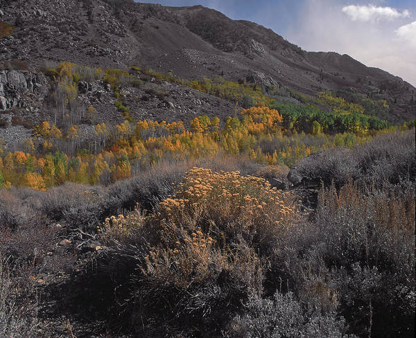 South Fork Valley Gold Art Print