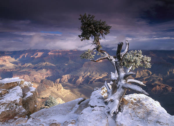Photograph - South Rim Of Grand Canyon by Tim Fitzharris