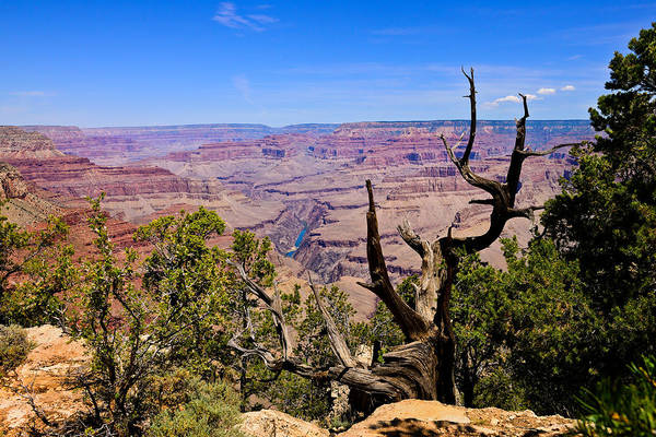 Photograph - South Rim View by Greg Norrell