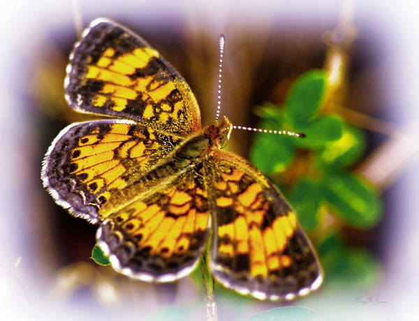 Photograph - Southern Butterfly by Barry Jones