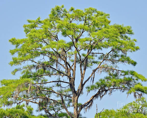 Wall Art - Photograph - Southern Cypress by Al Powell Photography USA