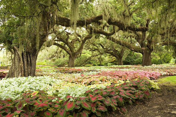 Photograph - Southern Garden by Marilyn Hunt