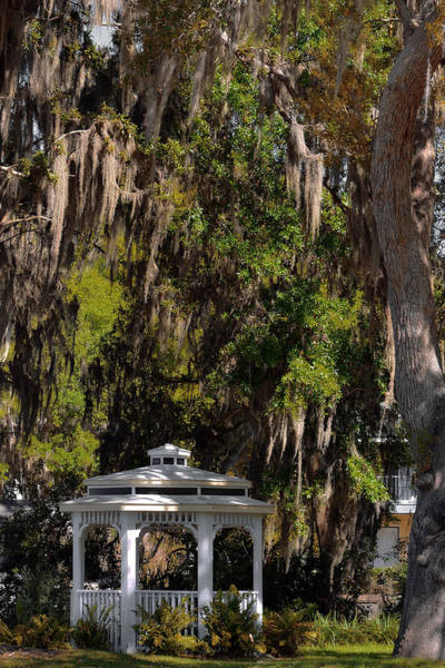 Wall Art - Photograph - Southern Gothic In Mount Dora Florida by Christine Till