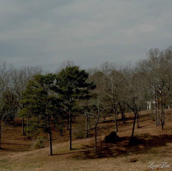 Photograph - Southern Landscape by Lesa Fine