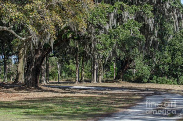 Photograph - Southern Pathway by Dale Powell