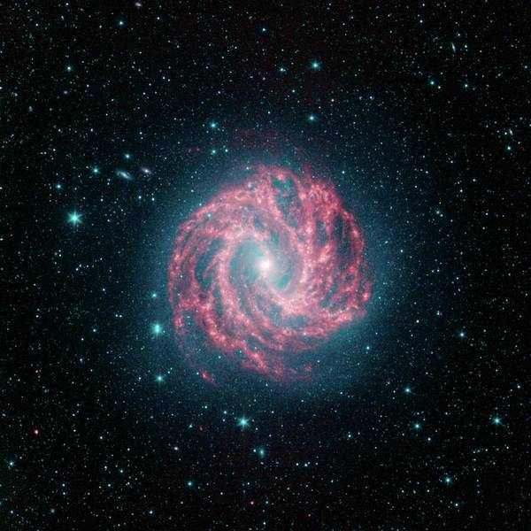 Pinwheel Photograph - Southern Pinwheel Galaxy by Nasa/jpl-caltech/science Photo Library