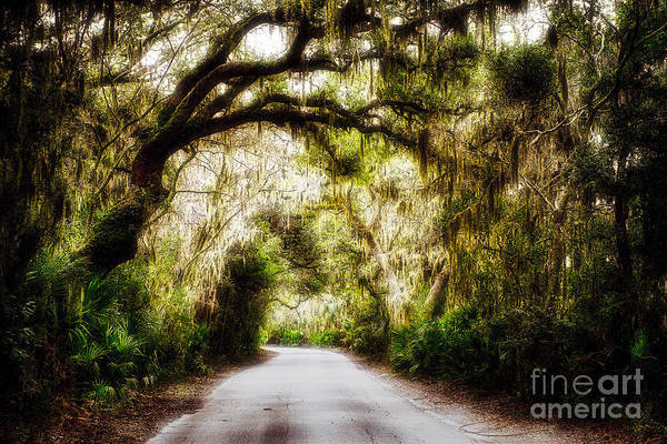 Wall Art - Photograph - Southern Plantation Road by George Oze
