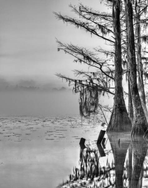 Photograph - Southern Roots by JC Findley