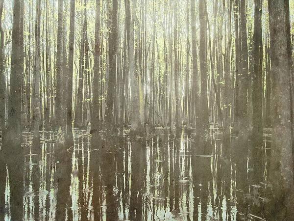 Brett Wall Art - Digital Art - Southern Swamp by Brett Pfister
