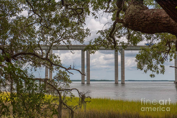 Photograph - Southern Treasure On Daniel Island by Dale Powell