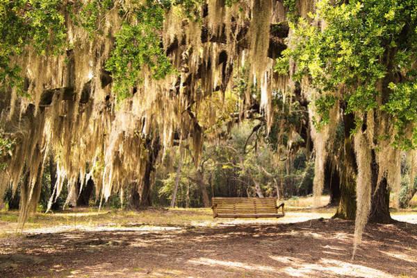 Coast Live Oak Photograph - Southern Tree by Serge Skiba
