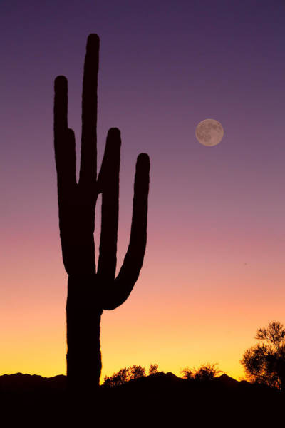 Photograph - Southwest Desert Moon Glow by James BO Insogna