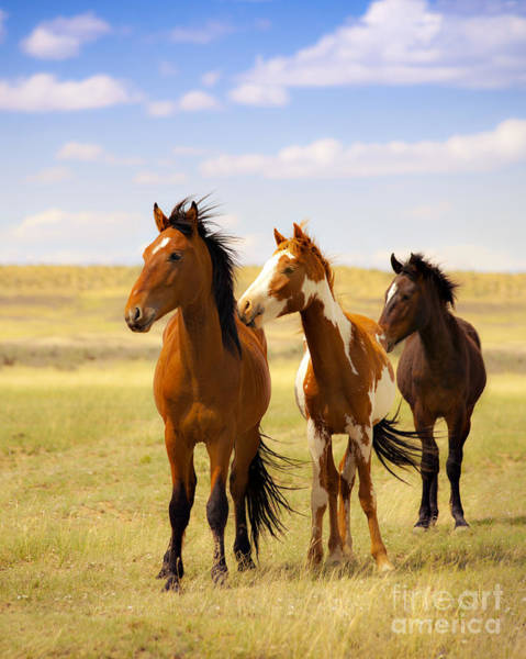Navajo Indian Reservation Photograph - Southwest Wild Horses On Navajo Indian Reservation by Jerry Cowart