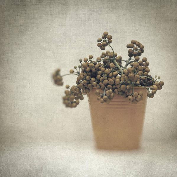 Photograph - Souvenirs De Demain by Zapista Zapista
