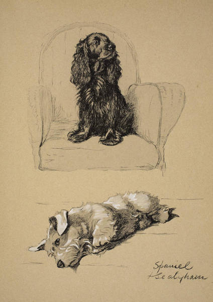 Hound Drawing - Spaniel And Sealyham, 1930 by Cecil Charles Windsor Aldin