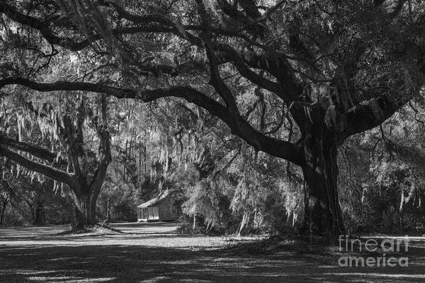 Photograph - Spanish Moss And Live Oaks by David Waldrop