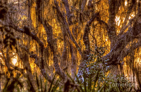 Photograph - Spanish Moss At Sunset by Dan Friend
