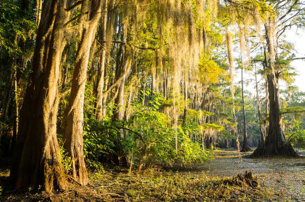 Wall Art - Photograph - Spanish Moss In The Morning Sun by Ellie Teramoto