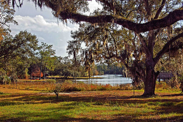 Digital Art - Spanish Moss On The Bon Secour River Wide Angle by Michael Thomas