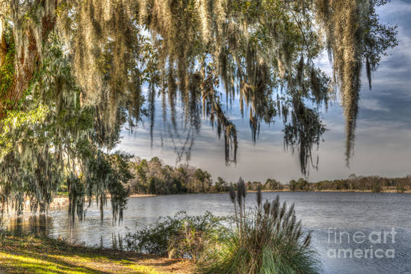 Photograph - Spanish Moss Spendor by Dale Powell