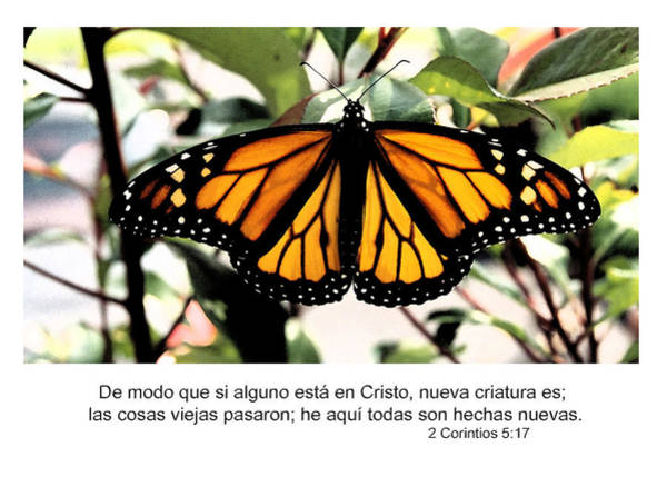 Photograph - Spanish New Creature In Christ  by Denise Beverly