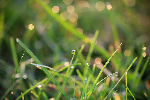 Photograph - Sparkling Morning Dew by Rachel Cohen