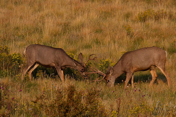 Photograph - Sparring Partners by Jim Garrison
