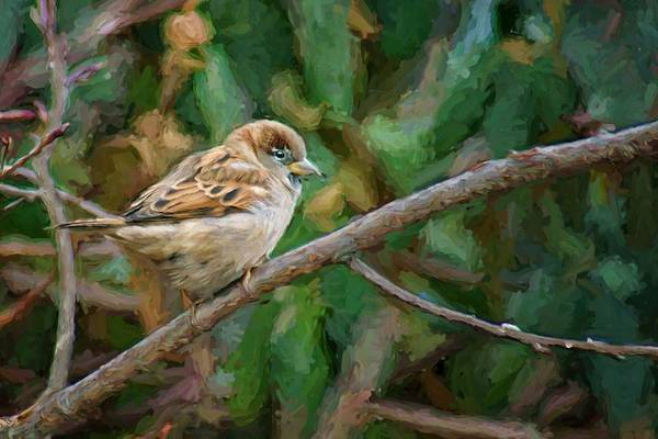 Wing Back Photograph - Sparrow In Winter by Nikolyn McDonald