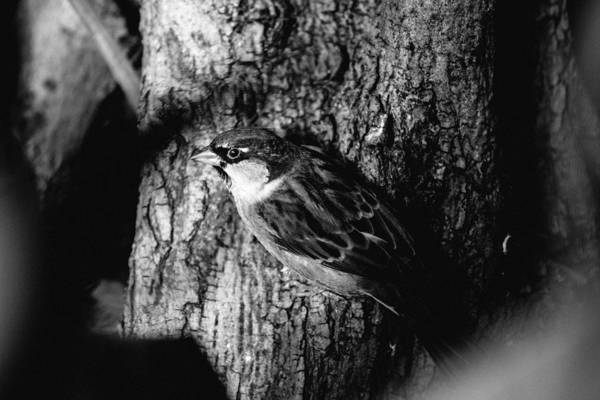 Wall Art - Photograph - Sparrow On A Tree by Pati Photography