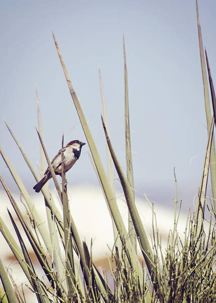 Wall Art - Photograph - Sparrow On The Yucca by Heather Applegate