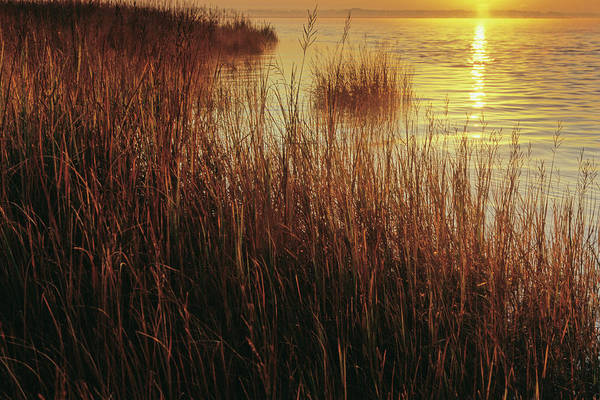 Marsh Grass Photograph - Spartina Cord Grasses In Salt Marshes by Peter Essick