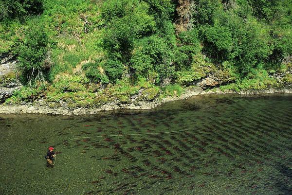 Angling Photograph - Spawning Sockeye Salmon by Beck Photography