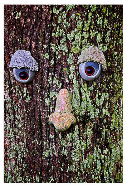 Photograph - Speak No Evil by Donna Proctor