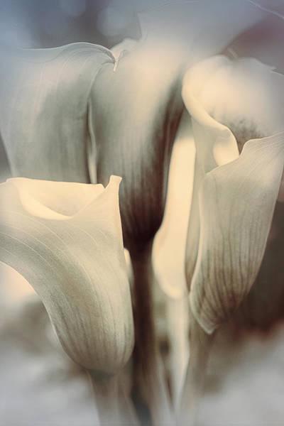 Calla Photograph - Speaking Softly by Darlene Kwiatkowski