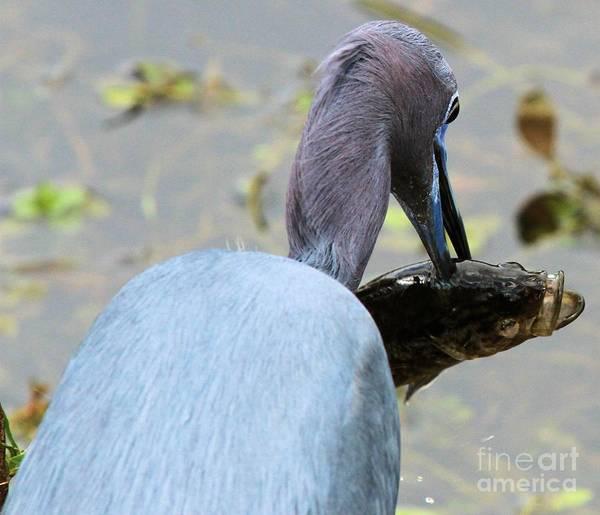Photograph - Spearfishing by Adam Jewell
