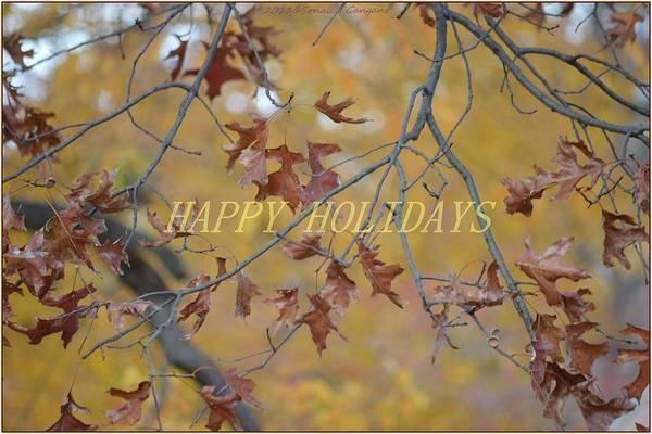 Greetingcards Photograph - Special Holiday Greetings by Sonali Gangane