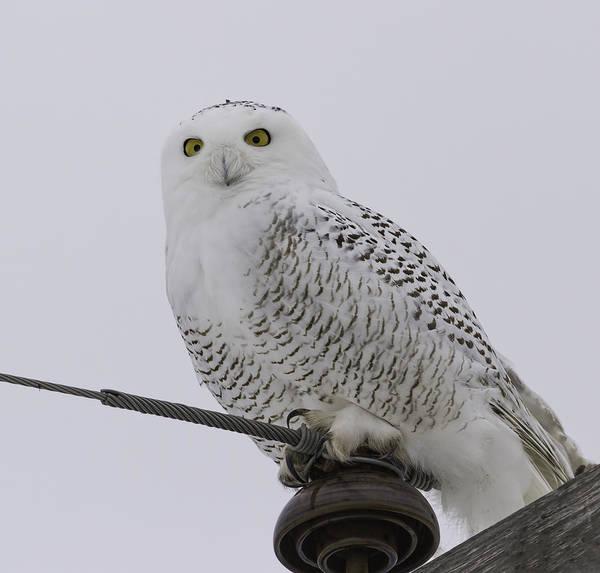 Special Owl Art Print