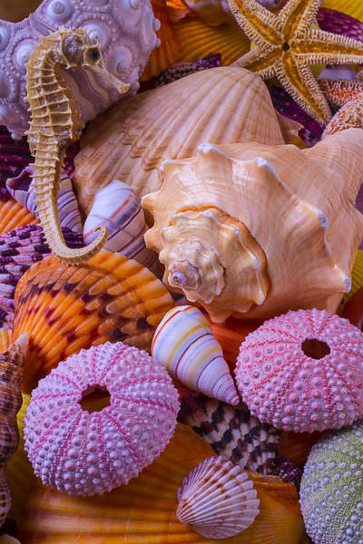 Seahorse Photograph - Special Shells by Garry Gay