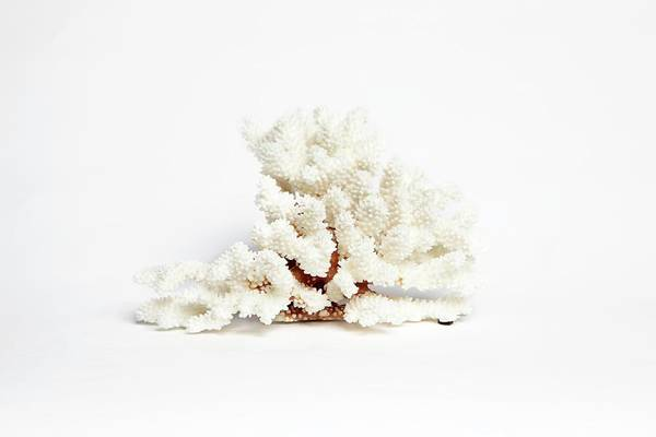 Specimen Photograph - Specimen Of Coral by Gregory Davies
