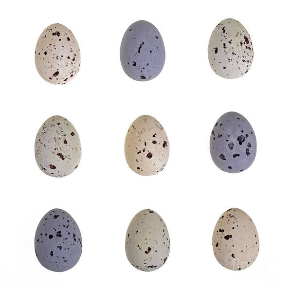 Birds Eggs Photograph - Speckled Egg Tic-tac-toe by Jane Rix