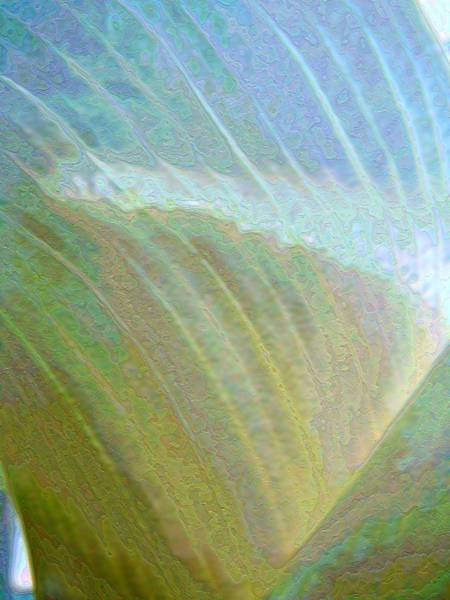 Photograph - Spectrum Calla Lily  by Lora Fisher