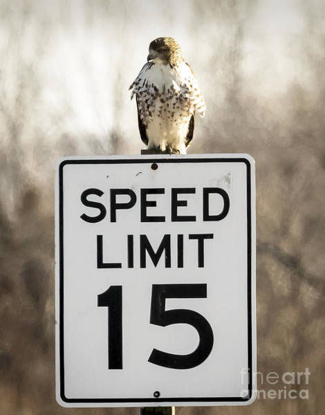 Photograph - Speed Limit 15 by Ricky L Jones